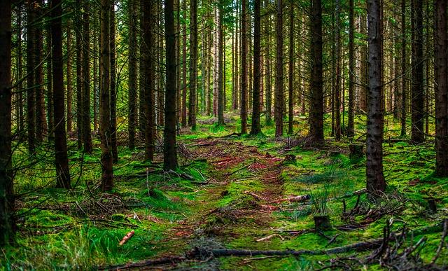 wood-3160960_640