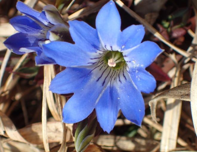海上の森に春が来た!(植物編)