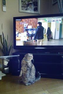 新しいテレビの前でリンお得意のポーズです。
