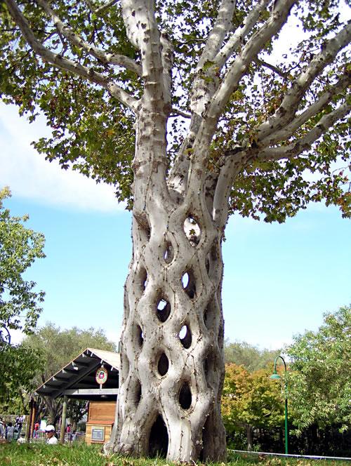 basket-tree.jpg