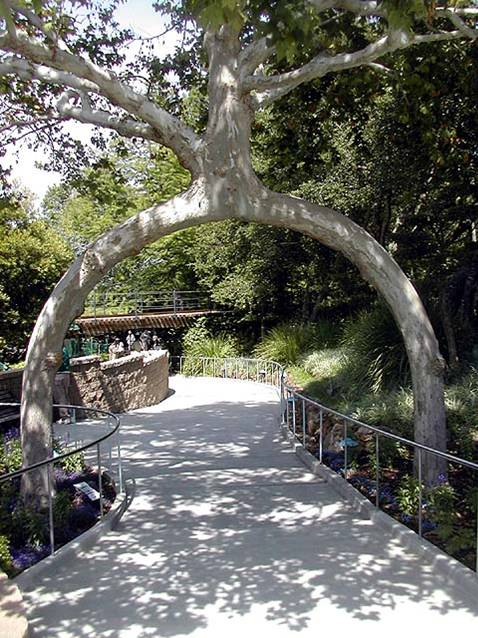 two-leg-tree.jpg