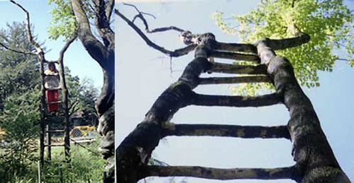 ladder-tree.jpg