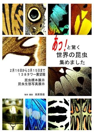 takaharapanf1.jpg